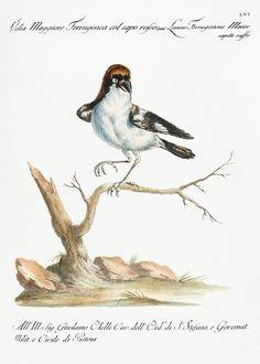 how do html color codes work Vintage Birds, Vintage Images, Vintage Bird Illustration, Bird Artwork, Classical Art, Bird Pictures, Exotic Birds, Free Illustrations, Antique Art