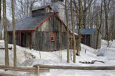vieille cabane à sucre <3 Sugar shack