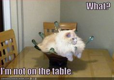 ...not on the table...hehe