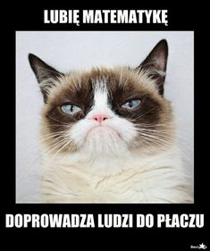 Happy Photos, Anime Meme, Grumpy Cat, Emoji, Funny Cats, Comedy, Verona, How Are You Feeling, Lol