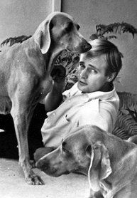David McCallum Biography | BIOGRAPHY OF DAVID McCALLUM. - Ducky's (NCIS) fan site