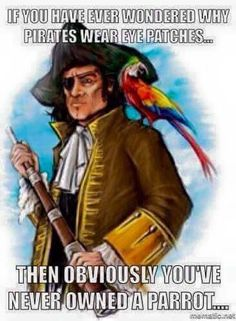 Actually most pirates wore eyepatches because, if you keep one eye in darkness in a light place for a while and then go into somewhere dark and open the eye you kept close you can see in the dark. Parrot Toys, Parrot Bird, Caique Parrot, Funny Birds, Funny Animals, Feathered Dinosaurs, Funny Parrots, Cockatiel, Budgies