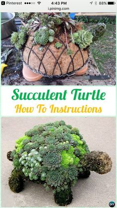 Topiary DIY Succulent Turtle Topiary Instruction- DIY Indoor Succulent Garden Ideas Projects - DIY Indoor Outdoor Succulent Garden Ideas Projects and Instructions: Interior Design with Succulent Garden Planter Designs and Display Ideas Succulent Planter Diy, Succulent Gardening, Garden Planters, Planting Succulents, Garden Art, Container Gardening, Organic Gardening, Succulent Ideas, Indoor Succulents