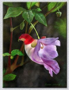 Types of Exotic Flowers | Parrot Flower - An exotic type of Impatient probably from New Guinea