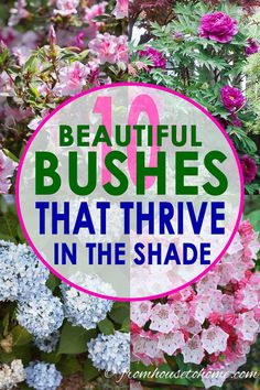 These shade bushes are perennial plants that will look beautiful in in backyards or front yards. Many of these shade plants are evergreen, low maintenance and flowering shrubs that grow well under trees and are perfect for your shade garden and landscapes. Click through to find our more #fromhousetohome #gardeningtips #gardenideas #shadeplants #shadegarden