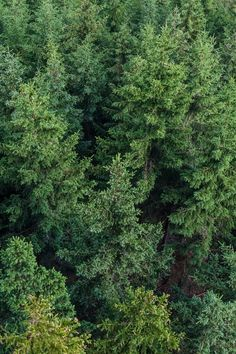 Tips and ideas to help you be more eco-friendly in your small business Aerial Photography, Nature Photography, Tree Forest, Free Stock Photos, Free Photos, Nature Photos, Ecology, 6 Years, Eco Friendly