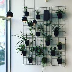Plants - All About Balcony Indoor Plant Wall, Indoor Plants, Indoor Garden, Decoration Plante, House Plants Decor, Herbs Indoors, Walled Garden, Hanging Plants, Home Deco