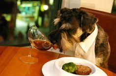 Descubre los mejores lugares Dog-Friendly de Madrid