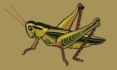 grasshopper illustration - Google Search