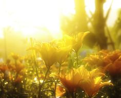 Flower chiangmai
