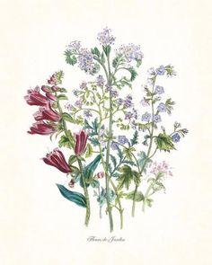 Fleurs de Jardin Series No.5 Plate 6 - Botanical Print