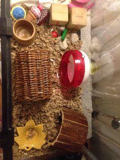 Winter white hamster cage Robo Hamster, Hamster Stuff, Winter White Hamster, Hamsters, Wine Rack, Cage, House Ideas, Room, Decor