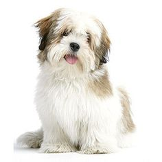 Small To Medium Sized Dogs | Dog Breeds, Labrador Retriever Dog, Great ...