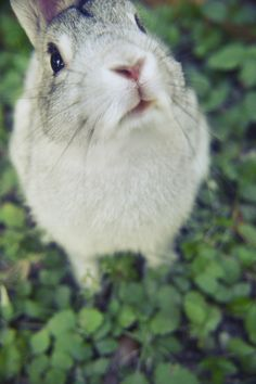 """Whatchu looking at?! Yeah I'm a rabbit! So what?! Wanna fight about it??!"" -rabbit probably"
