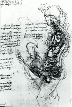 "Leonardo da Vinci gets sex all wrong. ""The semen was supposed to come down from the brain through a channel which can be seen in the spine of the man. In the woman the right lactiferous duct is depicted as originating in the right female breast and ending in the genital area. Even a genius like Leonardo da Vinci distorted men's and women's bodies—as seen now—to fit the ideology of his time and to the notions of his colleagues, who he paid tribute to."" Seen on http://conorhoughton.tumblr.com/"