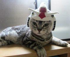 Gun-damn cute cat