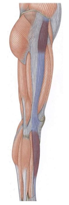 iliotibial band anterior and posterior portions