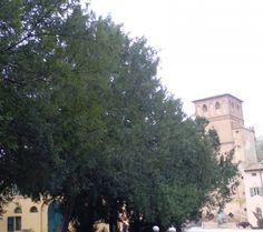 Viale di taxus navata. Villa Smeraldi. #taxusbacata. #villasmeraldi