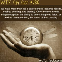 WTF Fact!