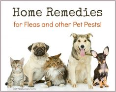 Home Remedies for Fleas (and other pests) On Your Pets