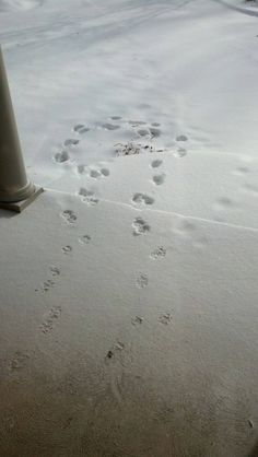 My dog loves the snow too #funny #loves #snow #humor #comedy #lol