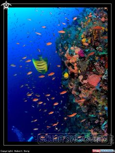 Manta point  in Flores Island - Indonesia
