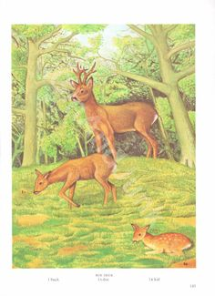 Your place to buy and sell all things handmade Buck Deer, Roe Deer, Deer Print, Vintage Coffee, Antique Books, Vintage Prints, Moose Art, Colours, Animal Prints