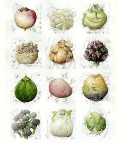 These beautiful original Contemporary Botanical Art watercolours by Shirley Slocock.