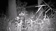 The badger - De das 24 juni 2016