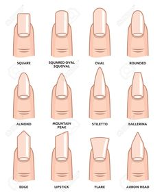 Illustration of Different nail shapes Fingernails fashion Trends vector art clipart and stock vectors. Image The post Illustration of Different nail shapes Fingernails fashion Trends vector art c appeared first on nageldesign. Summer Acrylic Nails, Best Acrylic Nails, Acrylic Nail Designs, Spring Nails, Squoval Acrylic Nails, Matte Nail Art, Oval Nail Designs, Acrylic Nails Almond Short, Nail Shapes Squoval