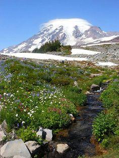 Mt. Rainier from Skyline Trail.  5.4 mile loop, 1700 elevation gain.  Mt. Rainier National Park, Washington.