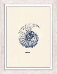 Sea shell  in blue  Nautilis 4 Ammonitida Sea by seasideprints, $12.00