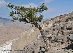 Oman | Fauna & Flora