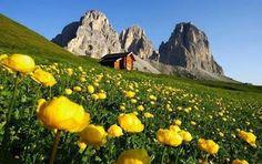 AltissimoNews: Tre Regioni a caso ... Chi vuole abitare in montagna?