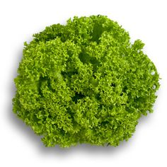 LOZANO RZ Indoor lollo bionda for autumn, winter and spring production. Very strong bottom and very strong against tip burn. Lettuce Seeds, Agriculture, Herbs, Strong, Indoor, Autumn, Winter, Interior, Winter Time