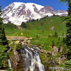 Hiking in Mt. Rainier National Park