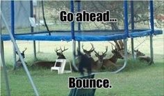 Could happen in Aberdeen - deer in those woods, right Katie?