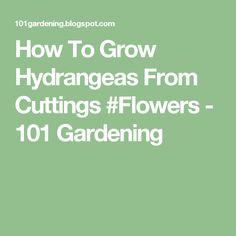 How To Grow Hydrangeas From Cuttings #Flowers - 101 Gardening