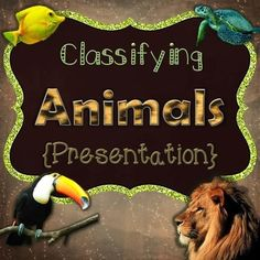 """1. Presentation (16 slides): This file contains the presentation in both PDF and PPT format. To view the PDF file as a presentation, select """"view"""" and then click """"full screen mode."""" This presentation is about classifying animals into two major groups: vertebrates (fish, amphibians, reptiles, & mammals) and non-vertebrates according to their physical characteristics.Topics Include:*Vertebrates and Invertebrates*Vertebrates Included: Fish, Amphibians, Reptiles, Birds, and Mammals*Vertebrate..."""