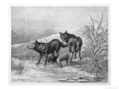 Website about cases of feral children. Raised By Wolves, Wolf Children, Ap Studio Art, Wild Child, Art Studios, Mother Nature, Lions, Art For Kids, Moose Art