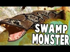cool FIGHTING GIANT SWAMP MONSTER BOSS FISH, SNAKEHEAD - Fish Feed And Grow Gameplay