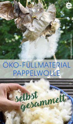"""Pappelschnee, die """"europäische Baumwolle"""" - Erbsenprinzessin Blog Hanukkah, Blog, Flood Prevention, Sprouting Seeds, Snow, Cotton, Blogging"""