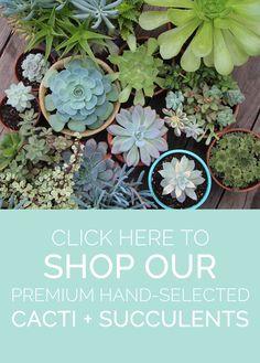 needles-leaves-premium-cacti-succulents.jpg