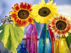 flowers windows desktop backgrounds flowers computer backgrounds ...