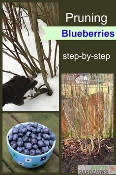 A step-by-step guide to pruning blueberry bushes each season Create an open growth habit with lots of new fruitful stems using this technique fruitgrowing gadening Home Vegetable Garden, Fruit Garden, Edible Garden, Box Garden, Garden Pots, Pruning Blueberry Bushes, Fruit Bushes, Pruning Fruit Trees, Growing Vegetables