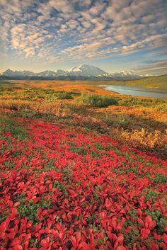 Denali National Parks,Alaska, USA
