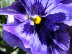 Flor morada II