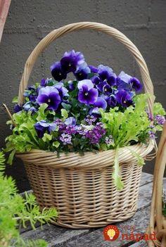 Spring basket ~ container garden Pansies are my favorite Container Plants, Container Gardening, Gardening Zones, Flower Basket, Flower Pots, Pot Jardin, Deco Floral, Art Floral, Pansies