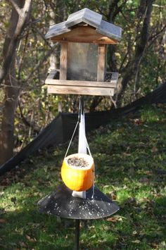 Have leftover pumpkins?  Turn them into bird feeders!