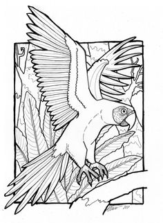 macaw coloring pages birds coloring  patterns to do  Pinterest